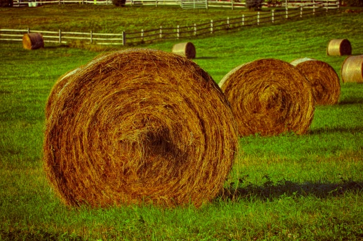 I always marvel at these giant rolled bales of hay. They remind of monolithic creations in a mystical New England Stonehenge.