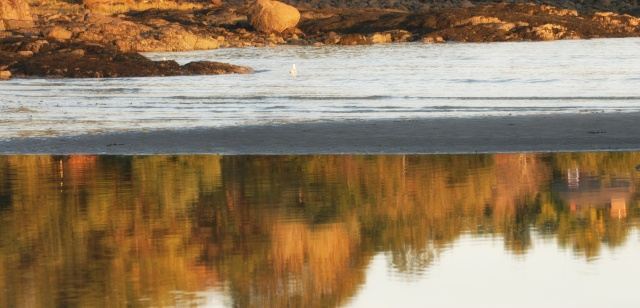 As I walked along an isolated beach in Cape Neddick, Maine, I saw the mirrored reflection of the autumn foliage reflected in the water.
