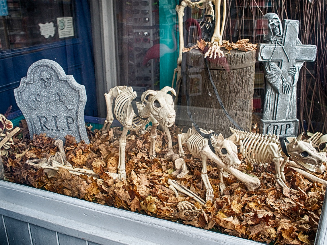 Skeletal dogs guard their territory in a storefront window.