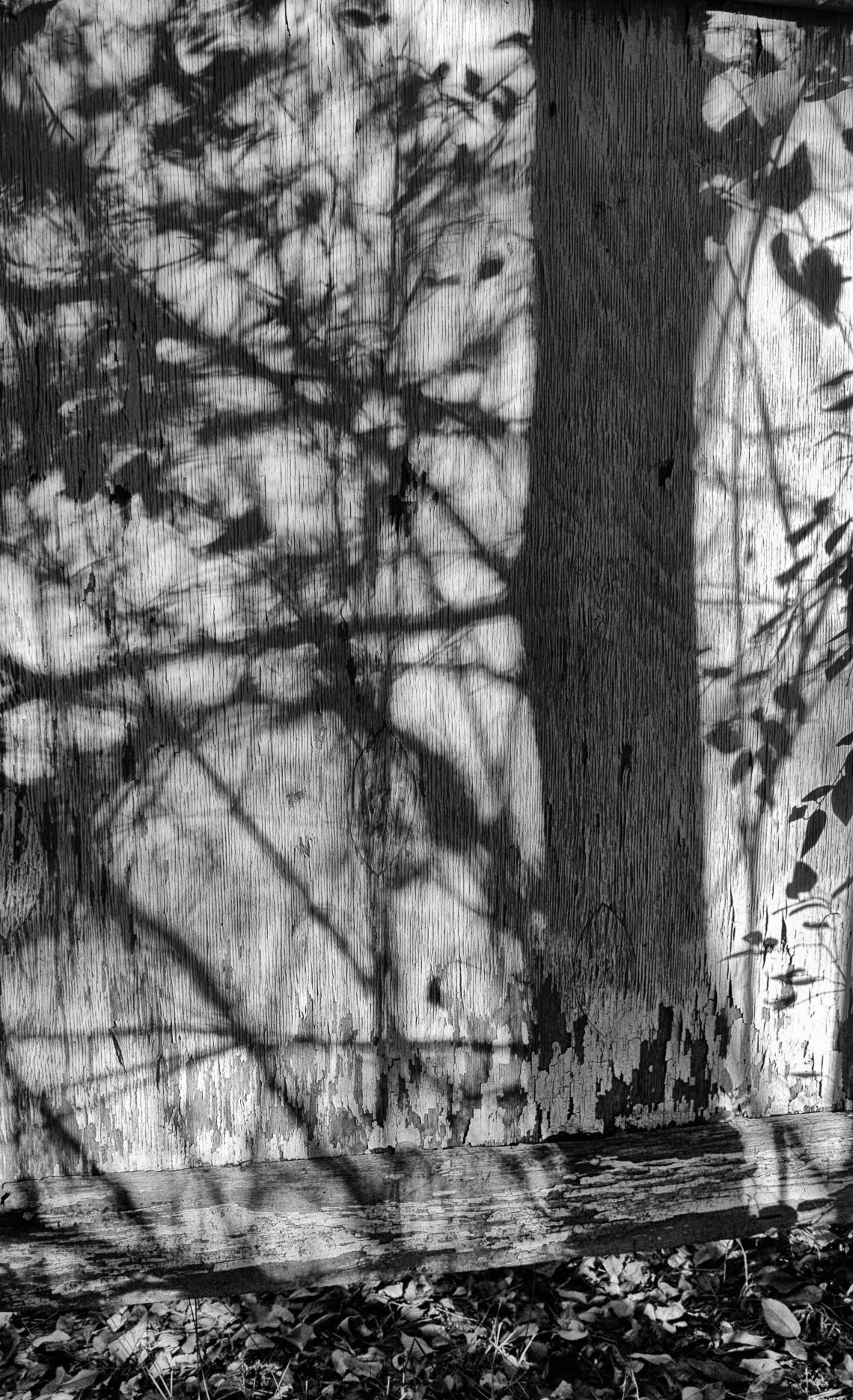 Late afternoon sun casts shadows on old barn door.
