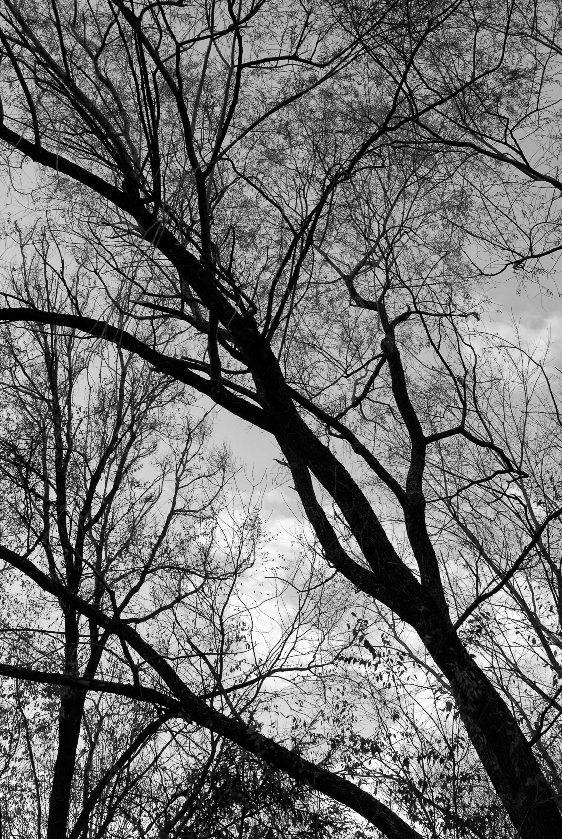 The black silhouette of a tree against the early evening sky gives a haunting performance.