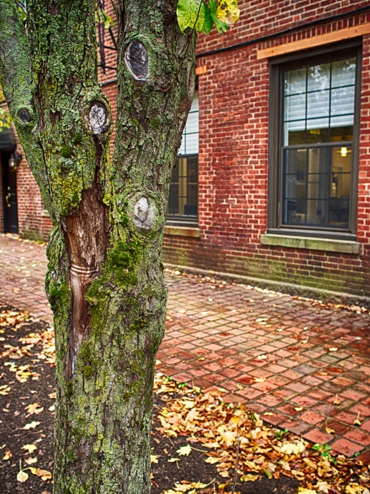 At the end of my walk, I found myself standing in front of this old gnarled tree, blending perfectly with the brick sidewalk and building.