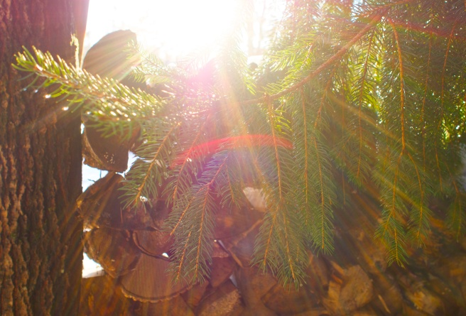 Caught the sun coming through the wood pile, even caught a prism.