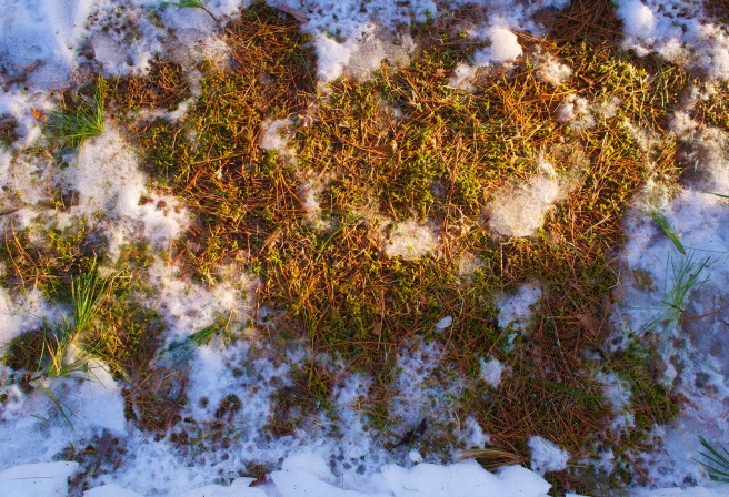 Little bits of green moss among brown patches and melting snow.
