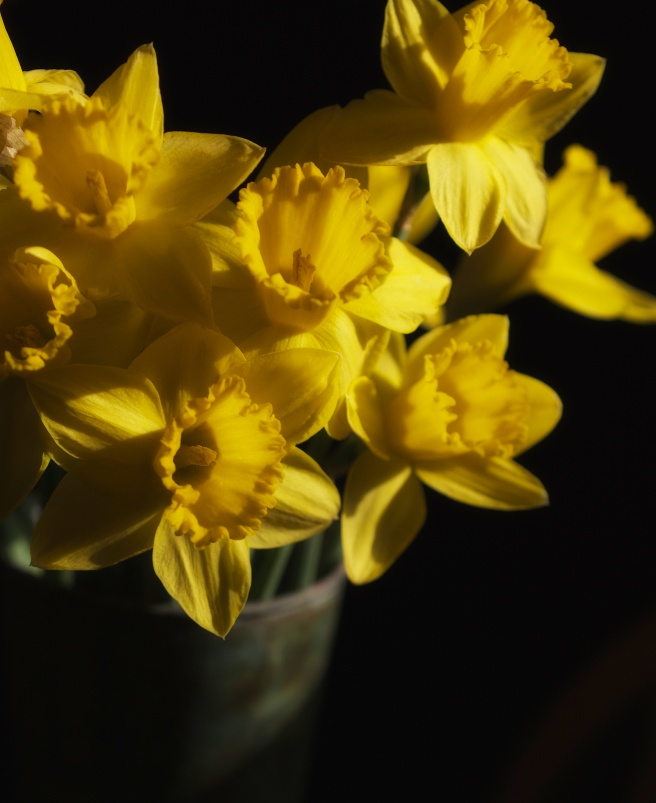 I bought daffodils and set them on my kitchen table.