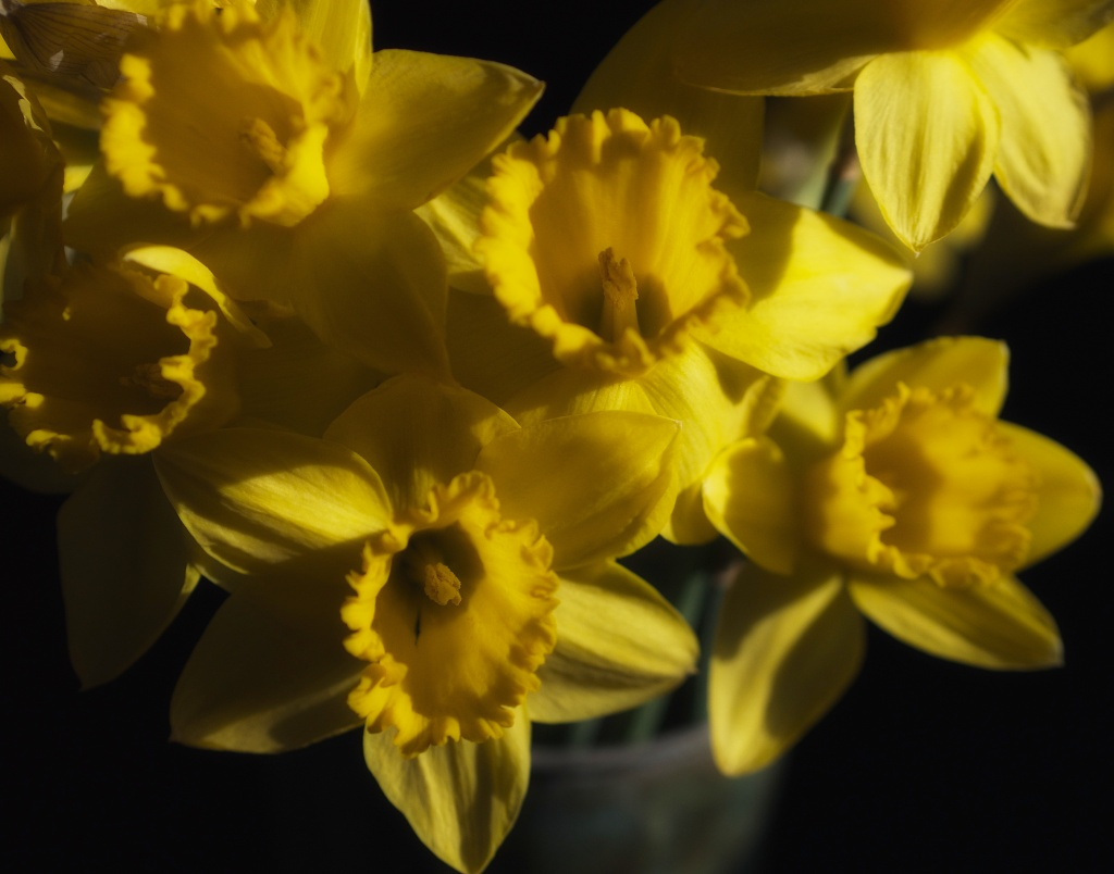 The daffodils brought the sun into my kitchen and chased away winter's shadows.