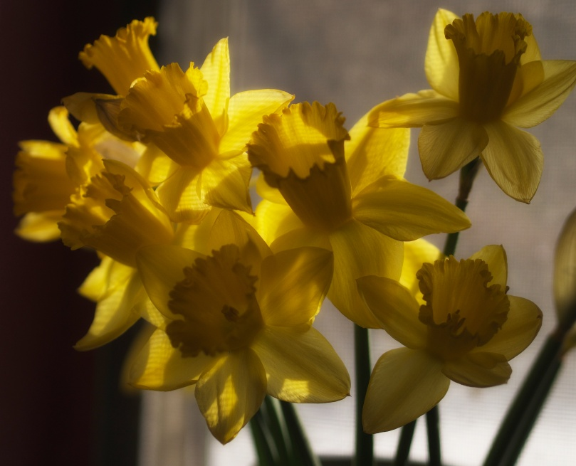 I looked at the daffodils and took a little of their yellow glow just for me.