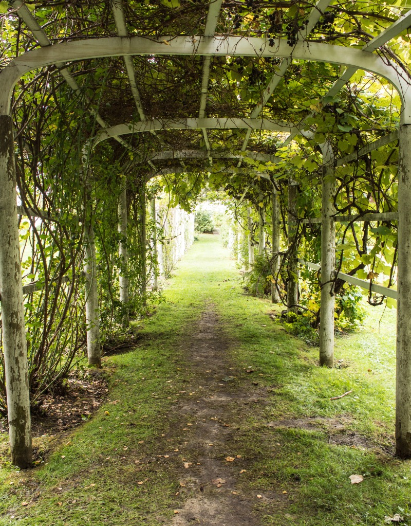 I found this arbor covered with grape vines and walked through it.