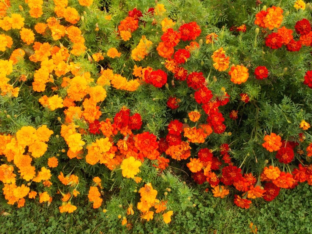 I love autumn's crips, vibrant colors.
