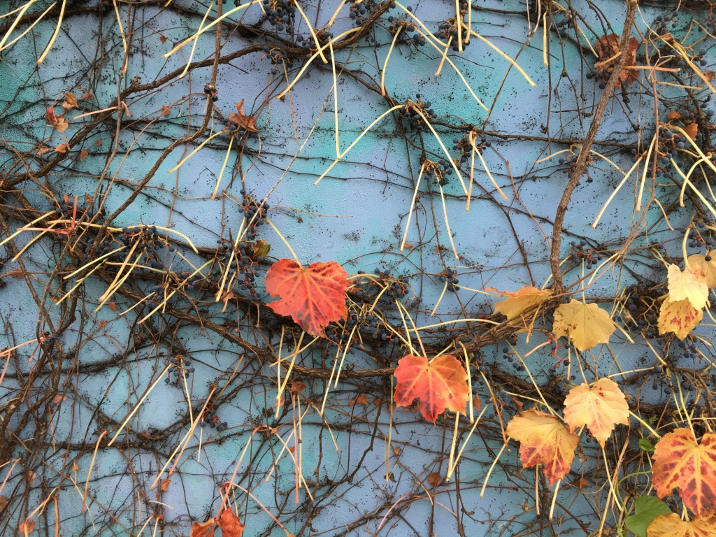 I just love the colors and textures of these vines running along the Ceres Street Bakery in downtown Portsmouth, NH.